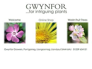 Gwynfor Growers
