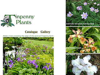 Tinpenny Plants